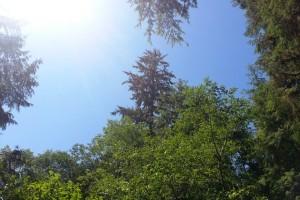Reseña gráfica de un bosque virgen en Oregon.