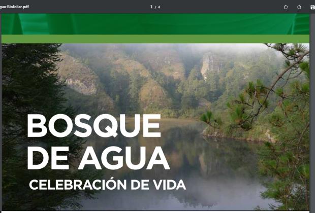 Estrategia para salvar el bosque de agua y a la Ciudad de México