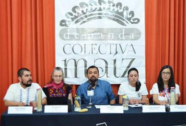 Demanda Colectiva Maíz: no se ha suspendido la medida precautoria que prohíbe siembra de maíz transgénico