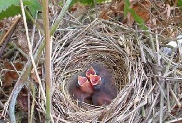 Dudas, conspiraciones y un nido en la ventana
