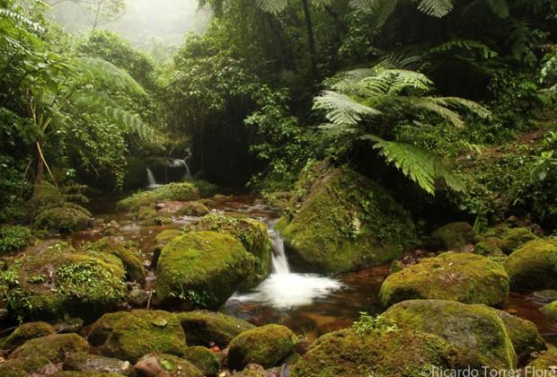 Liquidámbar, en el corazón de los ríos de niebla/El bosque mesófilo de la Sierra en riesgo