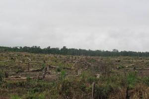 Bajar a la selva perdida. Segunda Parte