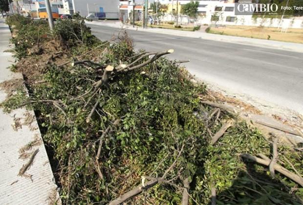 Obra pública: el desprecio por los árboles