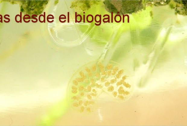 Historias desde el Biogalón: Caracoles caníbales y escarabajos con aguijón de alacrán