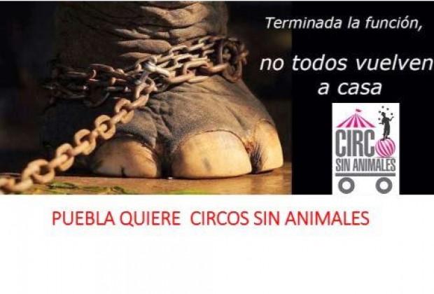 Ojos bien cerrados ante el sufrimiento animal