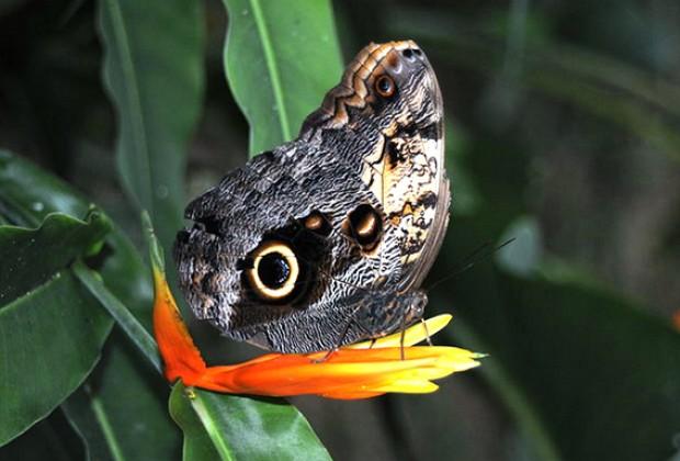 Las mariposas lacandonas
