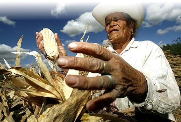 Trabajar en Puebla: El arduo trabajo del campesino