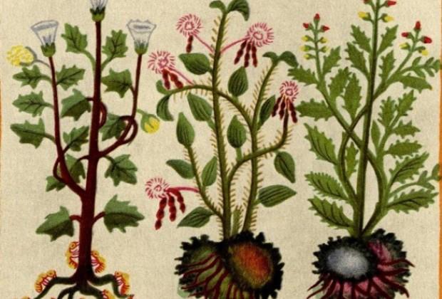 Árboles, flores y animales para la fatiga de los servidores públicos (prehispánicos)