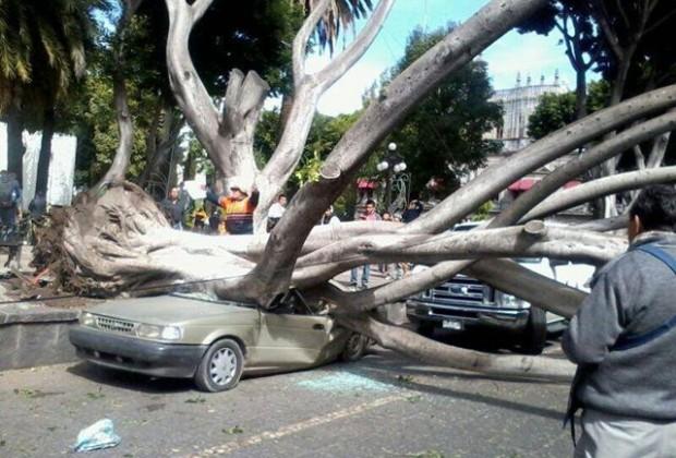 Golpe del árbol, del viento, del tiempo…
