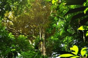 Diario de un Viaje a la Selva Lacandona